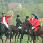 tekeresi-lovaspanzio_mecseki_borrend